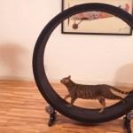 猫の運動不足を解消する猫回し車、Kickstarterにて目標資金集めに成功