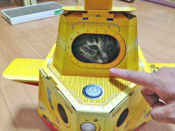 140812catsubmarine01 600x450 - 猫用潜水艦に潜む猫、涼しげな表情を浮かべる
