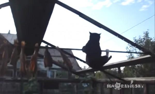 140814catfail 600x363 - 物干し竿から干物を狙う黒白猫、アクロバティックに落下を回避