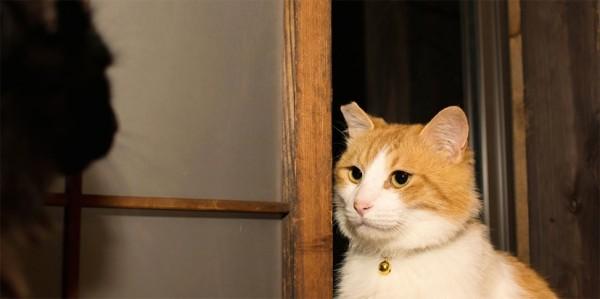140821catvideokibidango02 600x299 - ネコ市ネコ座の「猫動画フェス」、猫も人も助かる支援をクラウドファンディングで募集