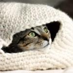 手編みの猫ベッドに包まれる猫、目を真ん丸にして外を眺める