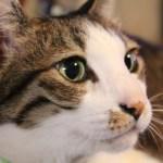 本日の美人猫vol.98