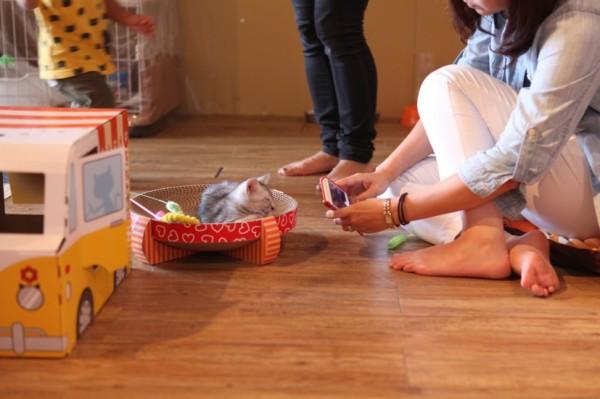 140907nekoichinekoza06 600x399 - 「ネコ市ネコ座」トークショー、杉本彩さんが猫保護活動への理解を呼びかける