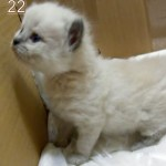 生後50日を5分にまとめた、猫タイムラプス動画