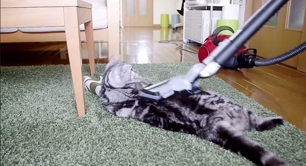 140926catcleaner 600x327 - 掃除機に吸われる猫、掃除中のカーペットに陣取って眠る