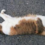 猫にまみれる写真展「渾身の猫展」が尾道で開催中。10月末まで