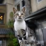 本日の美人猫vol.108
