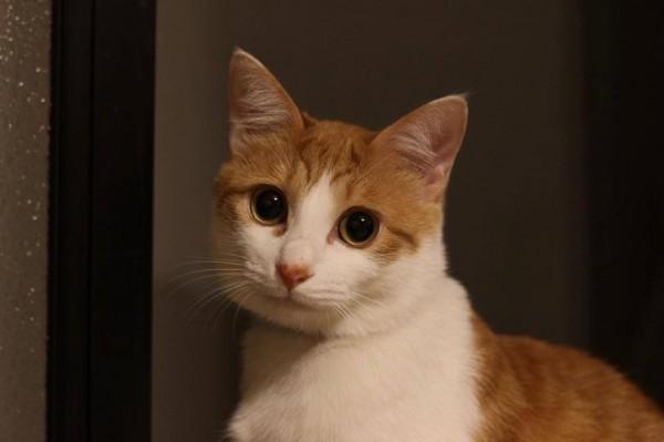 141030choro 600x399 - 本日の美人猫vol.109