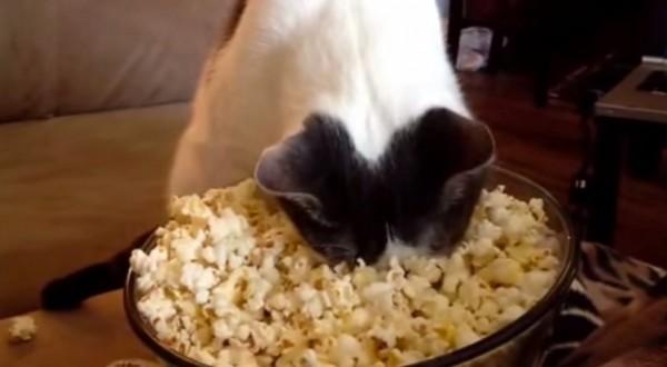 141117popcorncat 600x330 - ポップコーンに対面する猫、おもむろに顔を突っ込み暖をとる