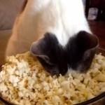 ポップコーンに対面する猫、おもむろに顔を突っ込み暖をとる