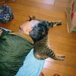 作家・森村誠一氏の公式サイトに、猫写真満載のページを発見