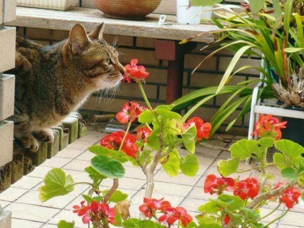141119morimura02 600x450 - 作家・森村誠一氏の公式サイトに、猫写真満載のページを発見