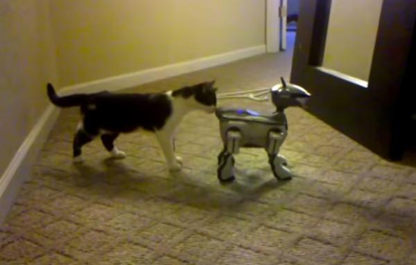 141122aibocat 600x383 - SONYのAIBOに対面する猫、おずおずとお尻の臭いを嗅ぐ