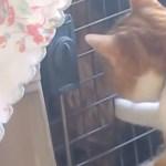 体調を崩した犬を心配する猫、キャリーの扉の鍵を開けて見舞う