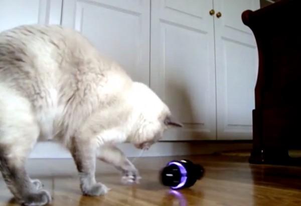 141122rollycat 600x412 - SONYのRollyが猫の声で鳴いたら、猫の反応はこうなる
