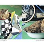 ふくよかな猫たち、写真集にてフォトジェニックな姿を披露
