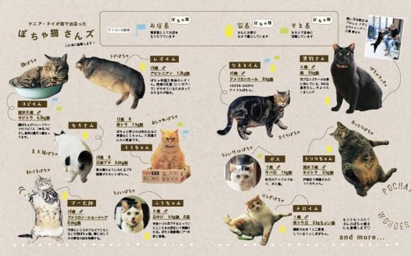 141202potyaneko02 600x374 - ふくよかな猫たち、写真集にてフォトジェニックな姿を披露