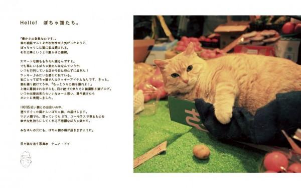 141202potyaneko04 600x374 - ふくよかな猫たち、写真集にてフォトジェニックな姿を披露