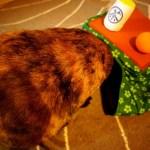炬燵の着ぐるみを検分する猫、頭隠して尻隠さず状態に