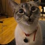 飼い主の遠吠えに応える猫、なぜか家族の笑顔を誘う