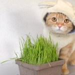 ヒツジ風に草を食む猫、仕事始めの朝を和ませる