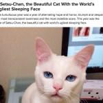 BuzzFeed恒例「2014年猫ネタBest30」、Best1にギャップ寝顔のセツちゃんが選ばれる