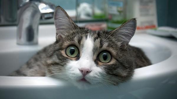 150111cat 600x337 - 本日の美人猫vol.117