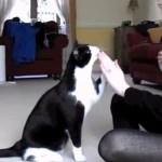 英国の賢き白黒猫、女子高生からお手とジャンプを教わり一躍有名に