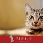 殺処分ゼロに繋がる「さくら猫」の認知拡大の取り組み、クラウドファンディングで支援を募る