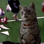 スーパーボウルに夢中な人を前にした猫、見事な手法でご飯へタッチダウンを決める