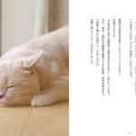 猫飼い主向け必携の防災ハンドブック。チェックリストで「もしも」に備えを