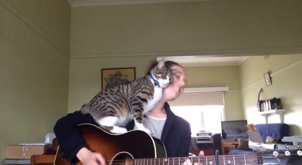 150131loverless 600x328 - 弾き語るお姉さんを邪魔する猫、許さざるを得ないエンディングに