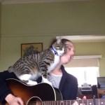 弾き語るお姉さんを邪魔する猫、許さざるを得ないエンディングに