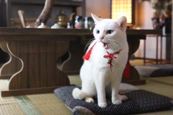 150202nekozamurai2 600x400 - 白猫と侍のコンビが織りなすツンデレ譚、『猫侍』の第二弾がドラマ化&映画化決定