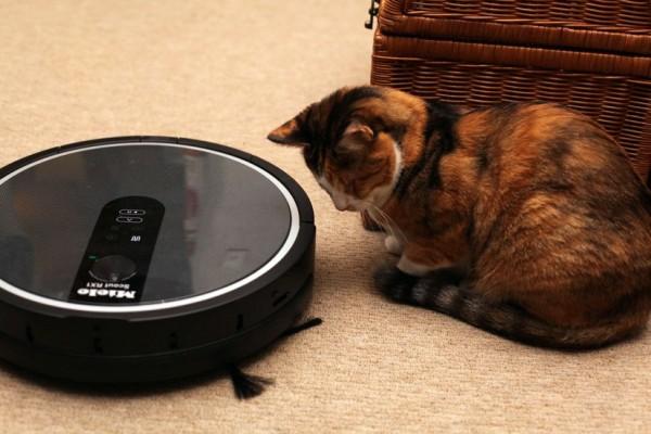 150203scout04 600x400 - 猫の爪とぎは、衝突回避センサー付きロボット掃除機のウォールとして使える