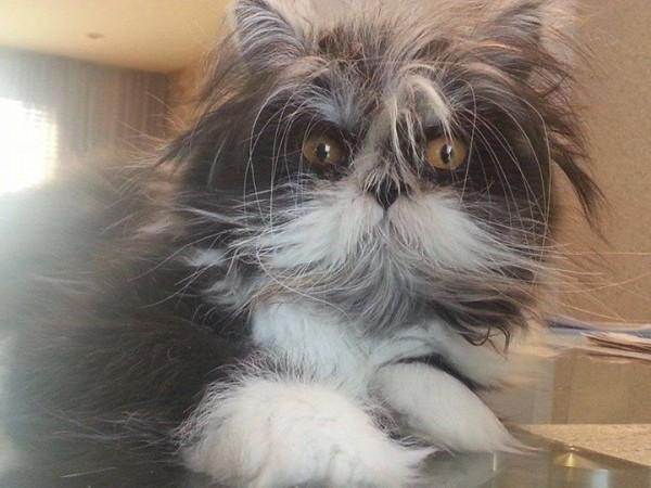150209atchoum03 600x450 - 犬と見まごう多毛症の猫、その行動はやっぱり猫そのもの