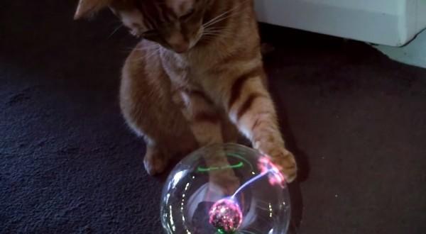 150218plasmacat 600x330 - プラズマボールで遊ぶ猫、肉球が放つ光に夢中