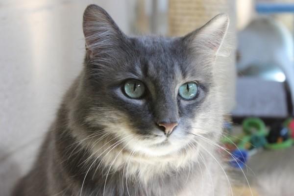 150314cat 600x400 - 本日の美人猫vol.126