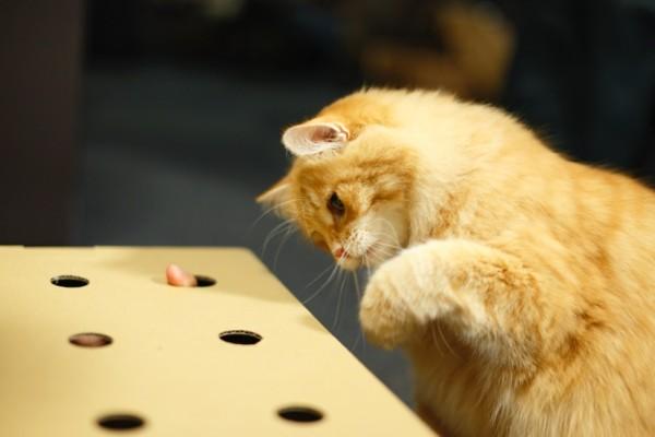 150320catmoguratataki 600x400 - 飼い猫も保護猫も幸せにする、猫もぐらたたきプロジェクトが始動