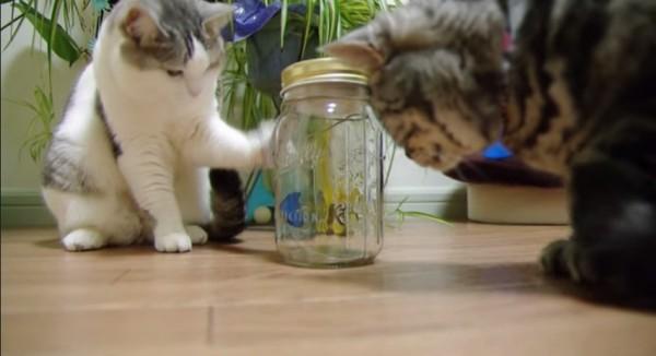 150323tyoutyou 600x326 - 蝶型オモチャに夢中な猫、リアルすぎてその場を離れず