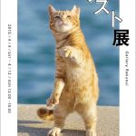猫の写真で心を読み解く、「猫と心理テスト展」が神楽坂で開催