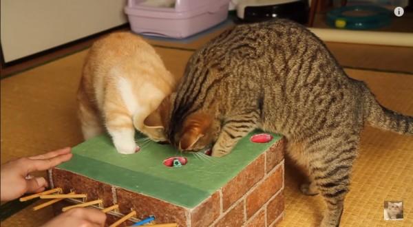150424catgame 600x330 - お手製オモチャに対面する猫、二匹同時に穴へ攻め入る