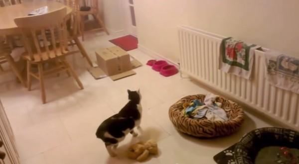 150426catinthebox 600x330 - 一瞬で姿を隠す、イリュージョニストの子猫現る