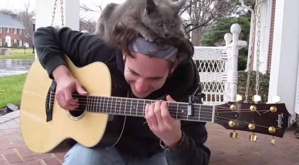 150428guitarcat 600x331 - ギター弾きの上に乗る猫、頭部を占拠しご満悦