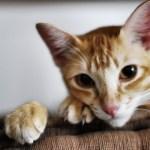 本日の美人猫vol.132
