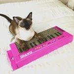 「CAT-IO」のロゴ入りキーボード、爪を研ぎ研ぎ演奏気分に