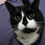本日の美人猫vol.133
