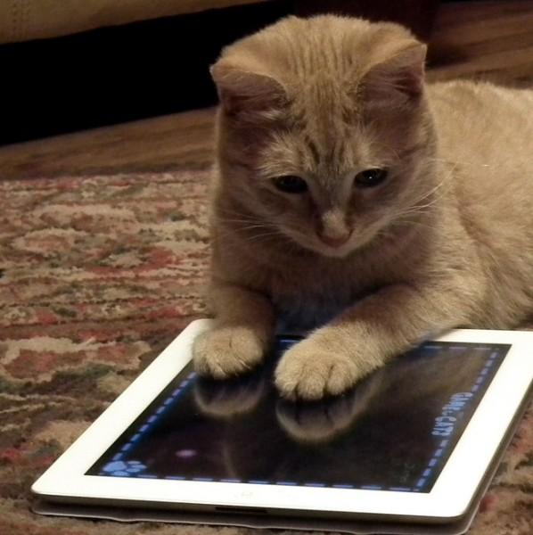 150523readingbook 598x600 - 学研の猫関連電子書籍、50%OFFセール実施中。6月4日(木)まで