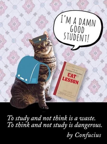 150527buddy03 446x600 - 贈るたび猫が助かるコーヒーギフト、猫のノートも新発売