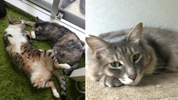 150528necorepublic02 600x339 - 保護猫カフェ「ネコリパブリック」が東京進出。猫が助かるリワードで支援を募集